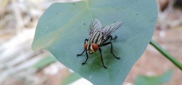 סוגי חרקים ביתיים – האם צריך לפחד