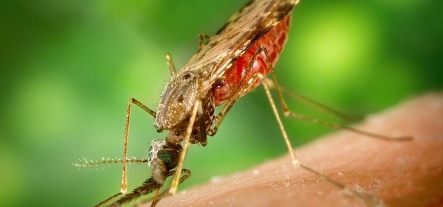 הדברת יתושים בגינה יעילה?